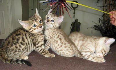 mecklenburg county animal shelter