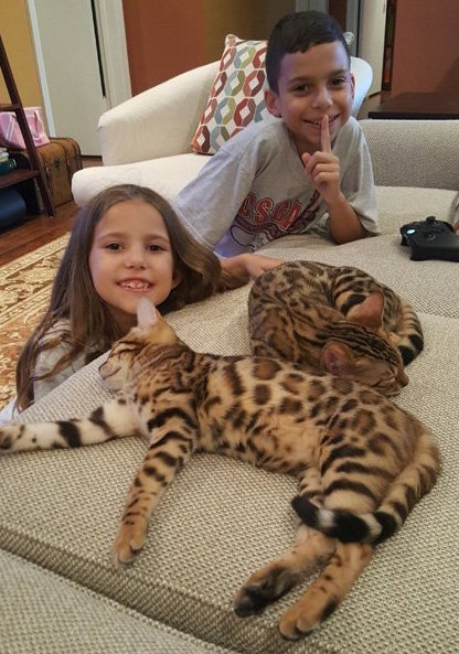 bengal kittens and kids playing