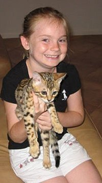 little girl with her bengal kitten