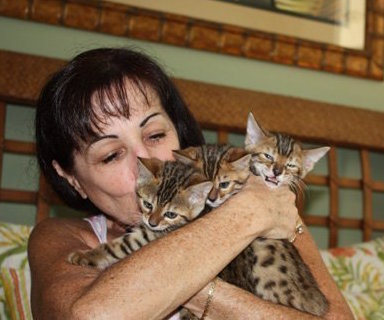 bengal kittens being held