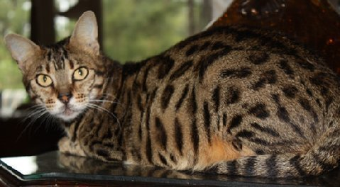 good cat food for urinary tract health
